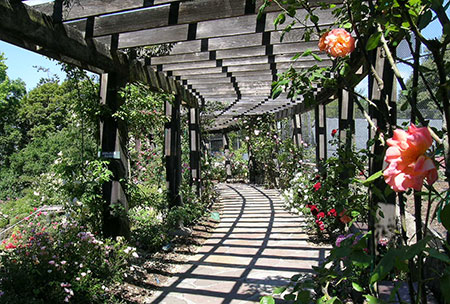 The Berkeley Rose Garden Pergola by Daniella Thompson