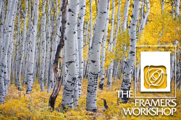 Framer_s Workshop November 2015 Newsletter