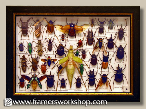 framed insect collection